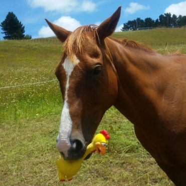 Gino with rubber chicken